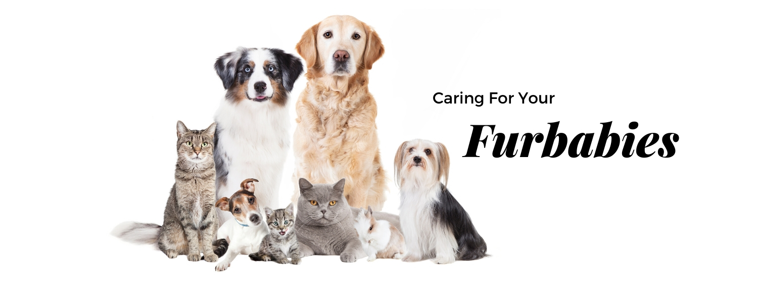 caring for your furbabies